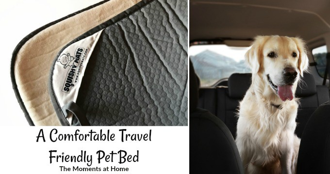 A Better Naptime for Pets while Traveling