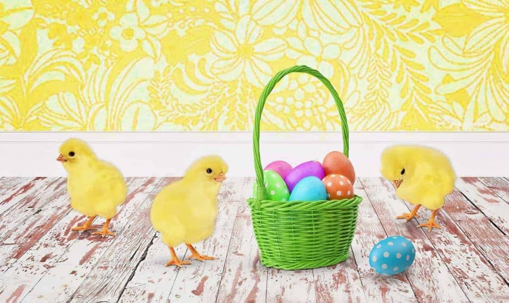 baby chicks around an Easter Basket with colored eggs